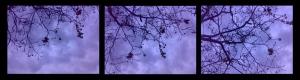 winter_pentagram_series_small